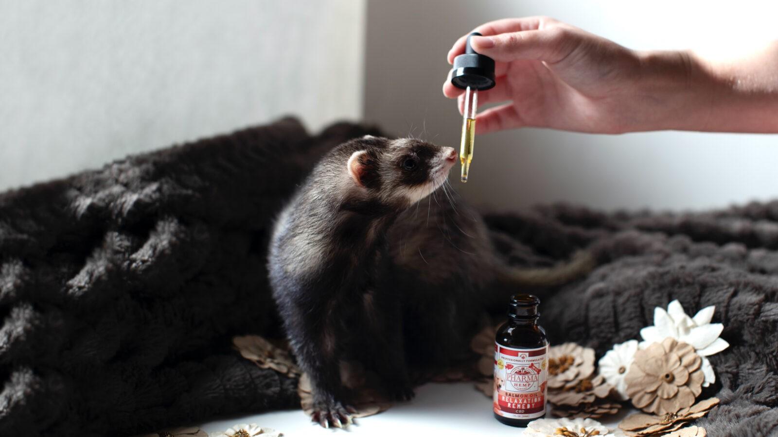 CBD для животных – Масло КБД для собак и кошек
